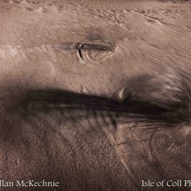 'Abstract of Marram' Isle of Coll