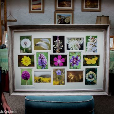 "*NEW* ""The Machair Collection"" by Allan McKechnie. Large 15 aperture framed work."